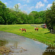 Horses At Home On The Range Art Print
