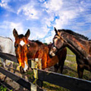 Horses At The Fence Art Print