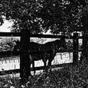 Horses By The Fence Art Print