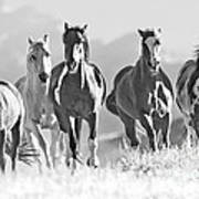 Horses Crest The Hill Art Print by Carol Walker