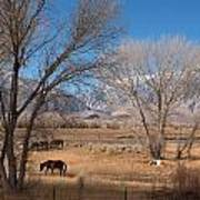 Horses Graze Beside The Owens River Near Bishop Art Print