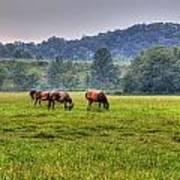 Horses In A Field 2 Art Print