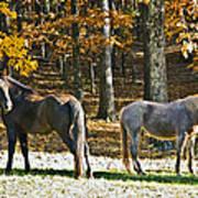 Horses In Autumn Pasture   Art Print by Susan Leggett