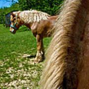 Horses In Meadow Art Print