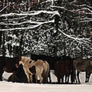 Horses In Snow Print by Tanya Jacobson-Smith