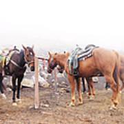 Horses In The Mist - Haleakala Art Print