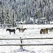 Horses In The Snow Art Print
