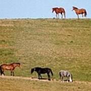 Horses Of Hayward Art Print