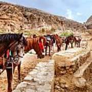 Horses Of Petra Art Print