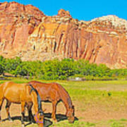 Horses On The Gifford Farm In Fruita In Capitol Reef National Park-utah Art Print