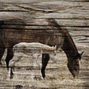 Horses On Wood Art Print