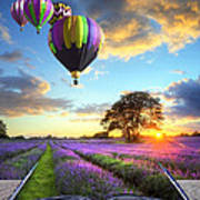 Hot Air Balloons And Lavender Book Art Print