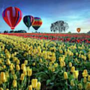 Hot Air Balloons Over Tulip Field Art Print