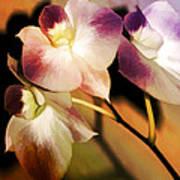 Hot Orchid Nights Art Print