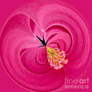 Hot Pink And Round Art Print by Anne Gilbert
