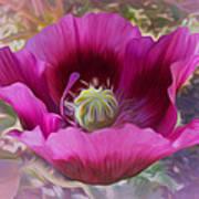 Hot Pink Poppy Art Print