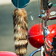 Hot Rod Coon's Tail Art Print
