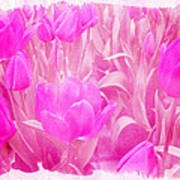 Hot Stuff   In Your Face Pink Tulips Art Print