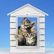 House Of Kittens Ck528 Art Print