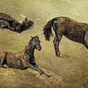 How A Black Horse Turns Brown - Pryor Mustangs Art Print