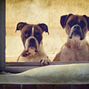 How Much Is That Doggie In The Window? Art Print by Stephanie McDowell