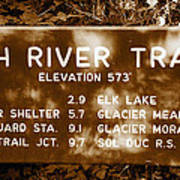 Olympic Hoh River Trail Sign Art Print