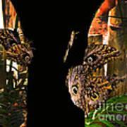 Huge Butterflies In Mindo Art Print