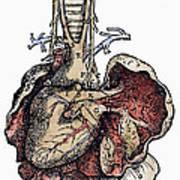 Human Heart, 1543 Art Print