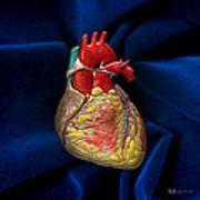 Human Heart On Blue Velvet Art Print