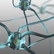 Human Nerve Cells, Computer Artwork Art Print