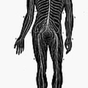 Human Nervous System Art Print