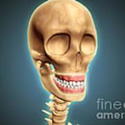 Human Skeleton Showing Teeth And Gums Art Print by Stocktrek Images