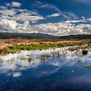 Humboldt Marshes In Spring Art Print