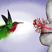 Hummer Splash In Flight Art Print by Diana Shively