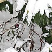 Humming Bird And Snow Art Print