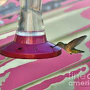 Humming Bird Feeding Art Print