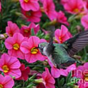 Hummingbird 3219 Art Print