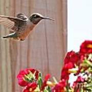 Hummingbird 4533 Art Print