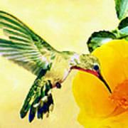 Hummingbird And California Poppy Art Print
