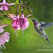 Hummingbird And Fuschia Art Print