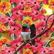Hummingbird And Hibiscus Art Print