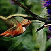 Hummingbird Dreams Digital Art Art Print