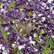 Hummingbird Flowers Art Print