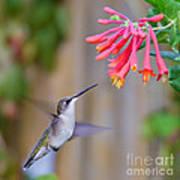 Hummingbird Happiness Art Print