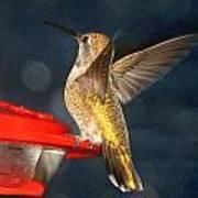 Hummingbird In My Window Art Print