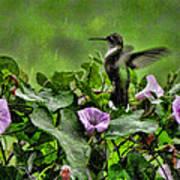 Hummingbird In The Rain Art Print