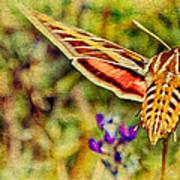 Hummingbird Moth In Wildflowers Art Print