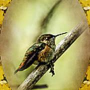 Hummingbird Noveau Art Print