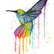 Hummingbird Of Watercolor Rainbow Art Print