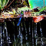 Hummingbird Shower Art Print